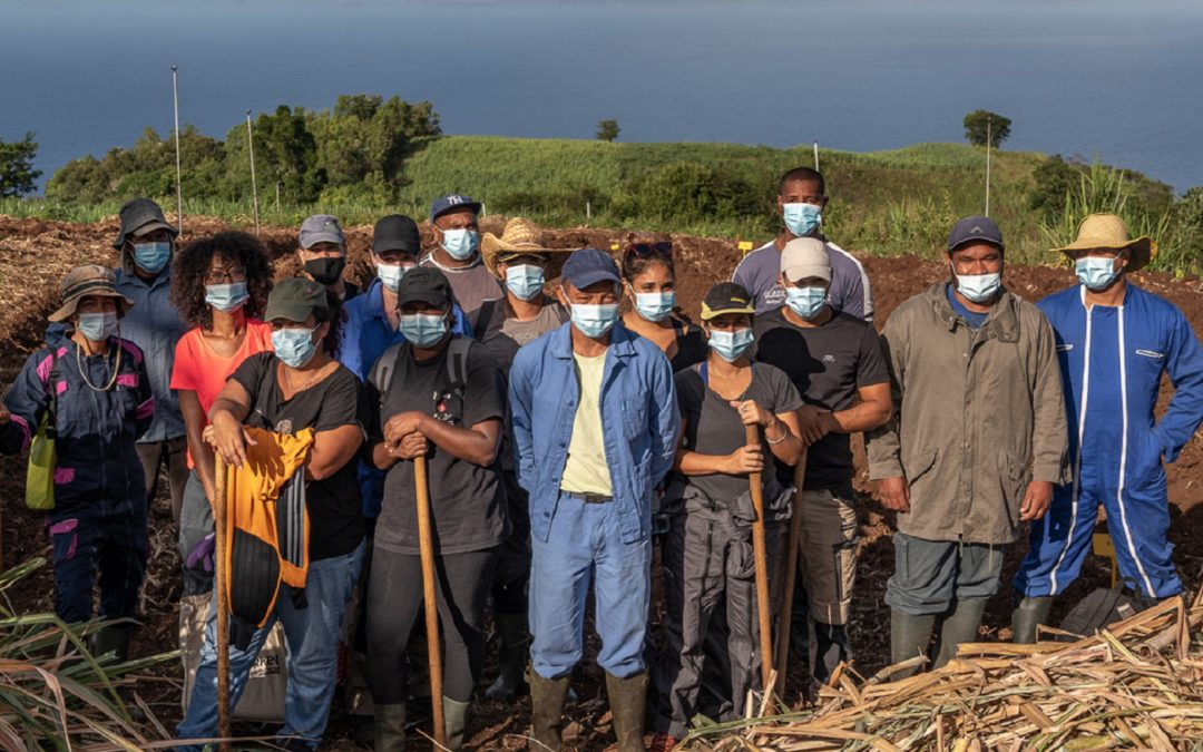 eRcane, acteur de la formation agricole… des stagiaires agricoles participent à la plantation d'un essai à Piton Saint-Leu